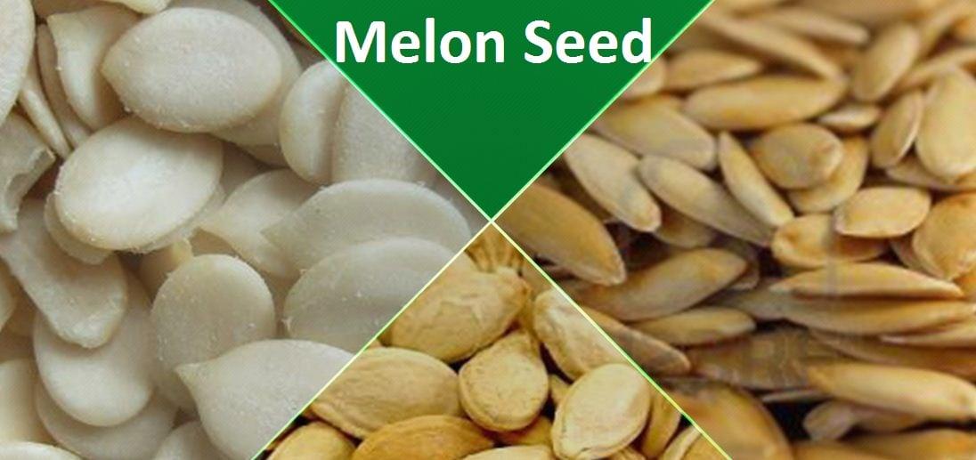 Image result for nigerian melon seeds
