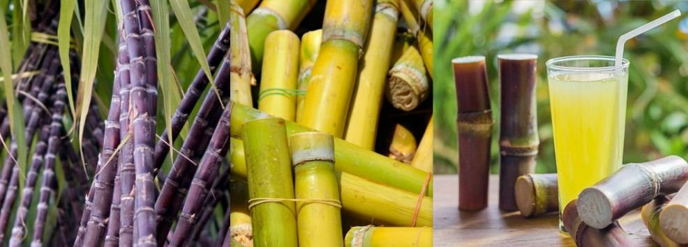 Image result for Healthy benefits of eating sugarcane for your health