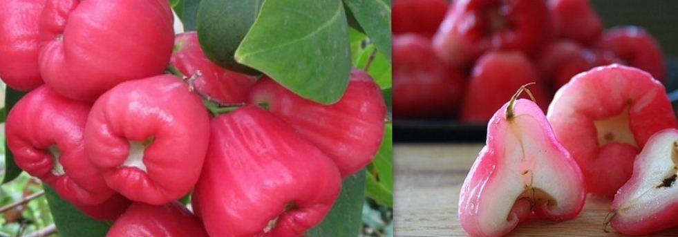 12 Super Health Benefits of Bitter Leaf - Finelib com