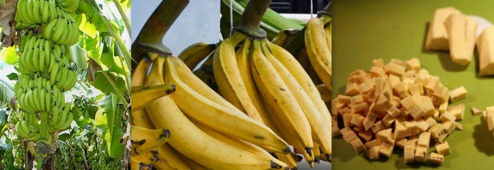 Plantain: 13 Surprisingly Health Benefits of Plantain