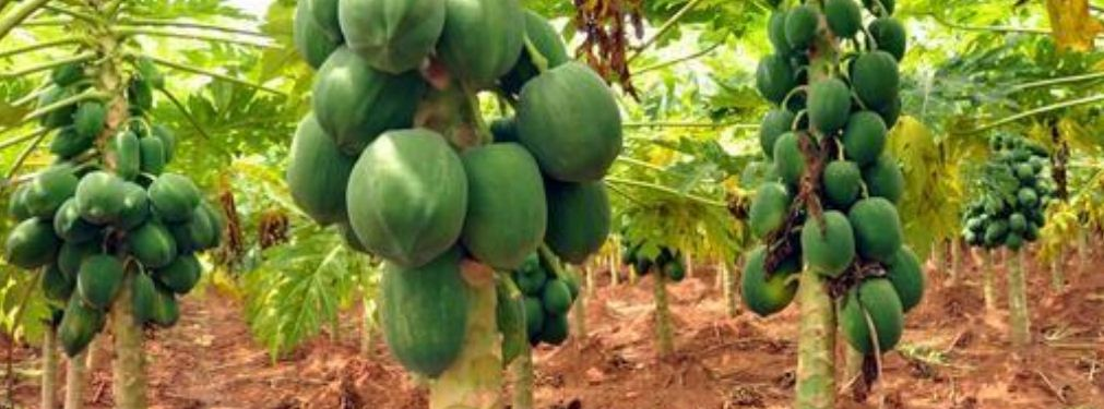 How to Start Fruit Farming Business in Nigeria