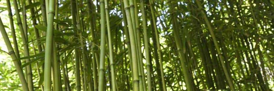 most people might be wondering what bamboo farming is all about and how one can make a profit in venturing into such agricultural business bamboo is a