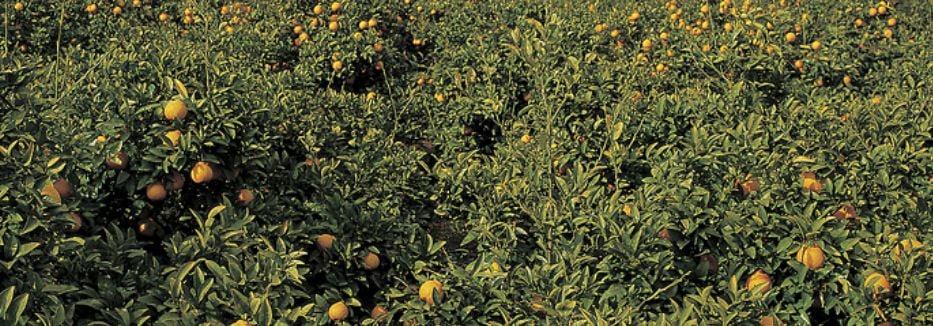 Fruit Farming: 9 Important Tips on Starting a Fruit Farming