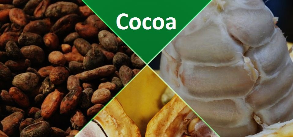 List Of Nigeria Cash Crops And Agricultural Produce For Exports